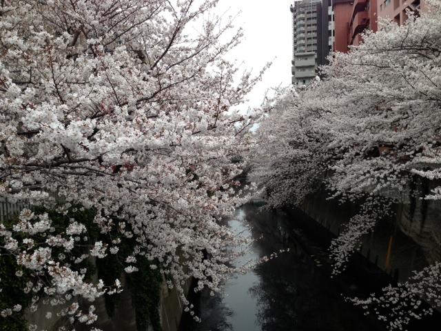 春よこい!こっちこっち。