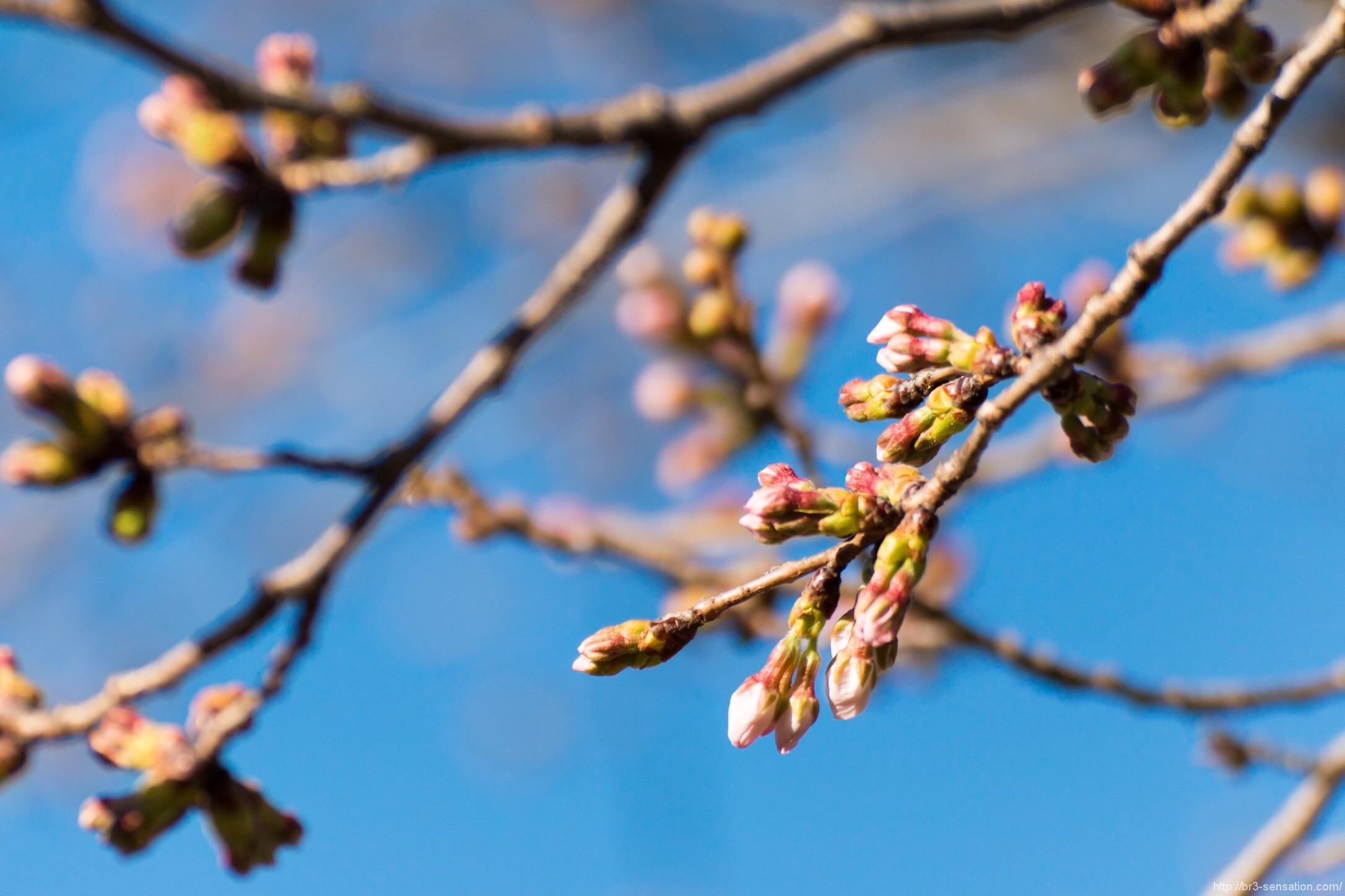 春 Coming Soon!