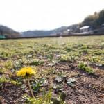 春が来た来た、ココに来た(^^)/
