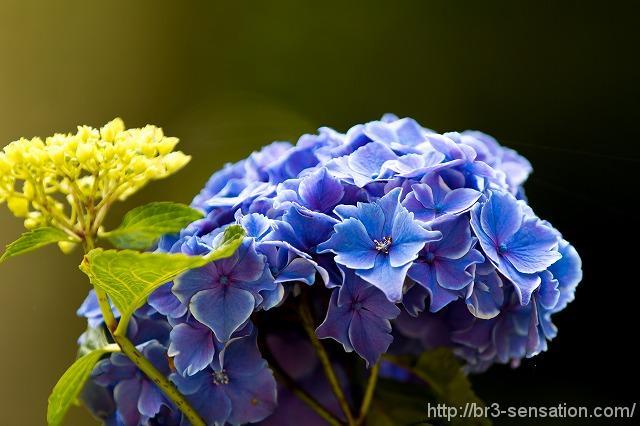 青がきれい